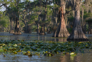 Caddo Lake, TX