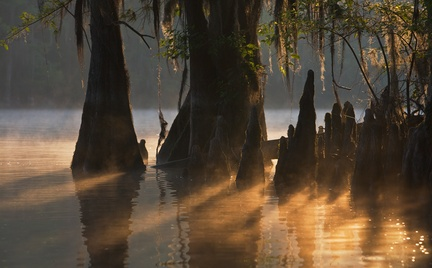 Caddo Lake at sunrise, TX